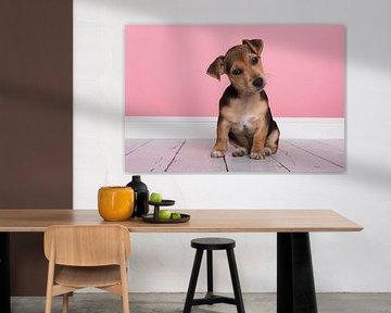 Jack Russell pup in het roze van Elles Rijsdijk
