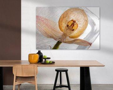 Orchidee in Eis 1 von Marc Heiligenstein