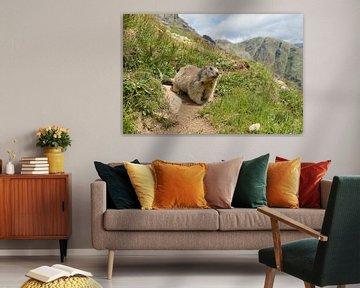 Alpen marmot in de bergen van Elles Rijsdijk