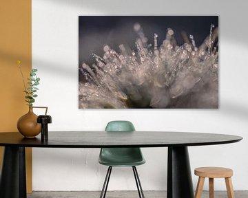 Heidegras glitzert von Tania Perneel