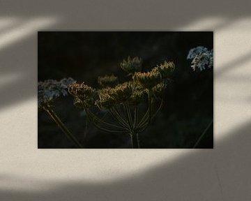 Weicher Punkt von Linda Slingerland