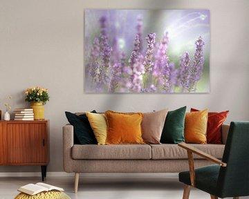 Lavendel Blüte des Sommers