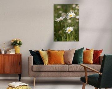 Wildblumen von Clazien Boot