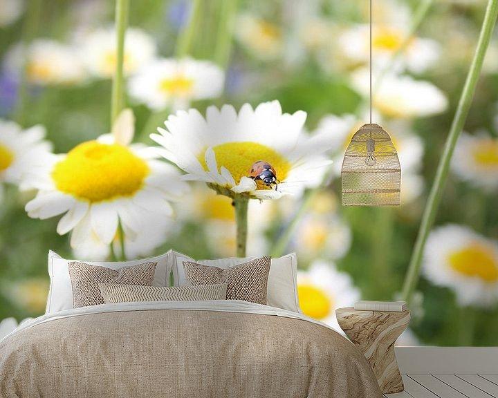 Sfeerimpressie behang: lieveheersbeestje op margriet van Saimi Triemstra