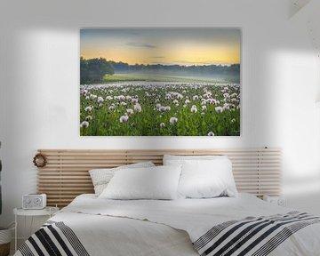 Mohnblumen in der frühen Morgensonne von Maurice Welling