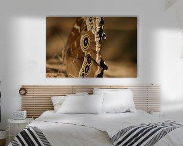 Vlinder van Robbert van der Kolk