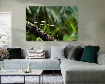 Kleine Pilze im dunkelgrünen Wald von Dorota Talady