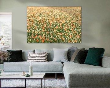 Tulpen von Paul Heijmink