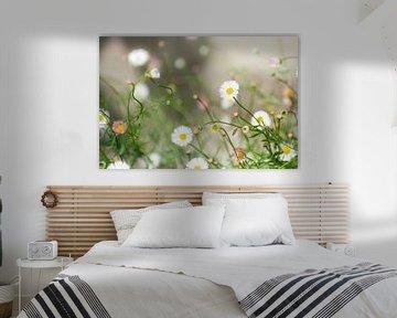 Wildblumengarten mit weißen Gänseblümchen von Dorota Talady