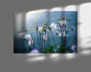 Blumen im Morgenlicht von Iris Lobregt