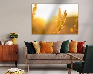Lavendel Valensole 6 van Vincent Xeridat