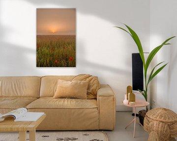Mohnfeld bei Sonnenaufgang von Moetwil en van Dijk - Fotografie