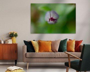 Makro einer Tulpe mit Wassertropfen - Draufsicht von Klik! Images
