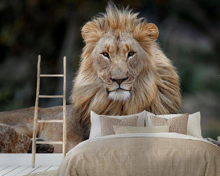 Beispiel fototapete: Mächtiges Porträt eines afrikanischen Löwen (Panthera leo), der auf einem Felsen liegt von Nature in Stock