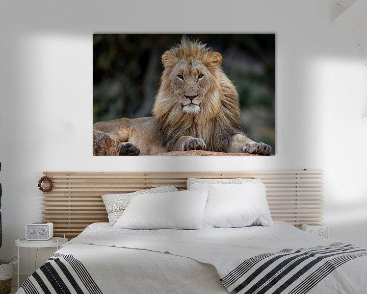 Beispiel: Mächtiges Porträt eines afrikanischen Löwen (Panthera leo), der auf einem Felsen liegt von Nature in Stock