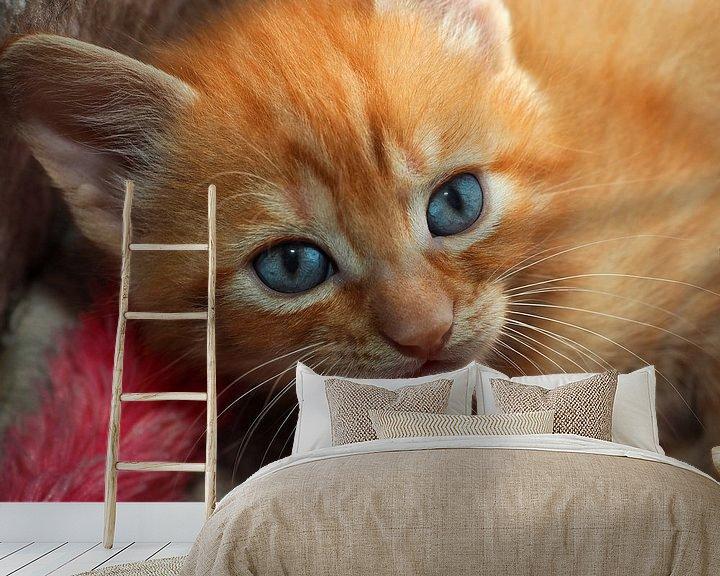 Beispiel fototapete: Rotes Kätzchen mit blauen Augen von Eye to Eye Xperience By Mris & Fred