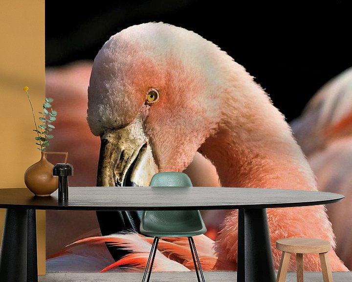 Beispiel fototapete: Flamingo von Eye to Eye Xperience By Mris & Fred
