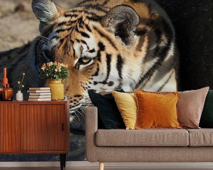 Beispiel fototapete: Schöner sibirischer Tiger von Eye to Eye Xperience By Mris & Fred