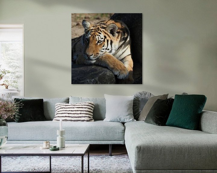 Beispiel: Schöner sibirischer Tiger von Eye to Eye Xperience By Mris & Fred