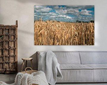 Getreidefeld von Simen Crombez