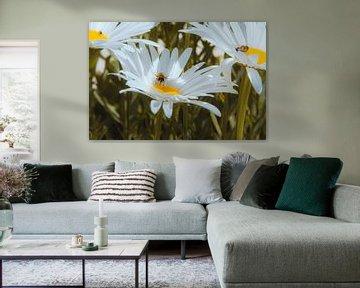 Blumenfeld von Simen Crombez