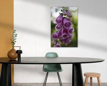 Violetter Fingerhut von Linda Slingerland