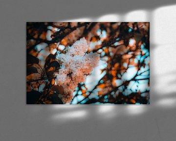 goldenhour bloemen van Simen Crombez
