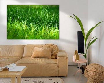 Frisches Gras von Simen Crombez