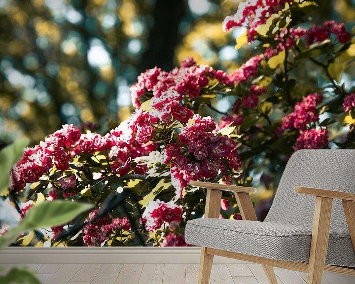 Impression: Fleurs roses sur Simen Crombez
