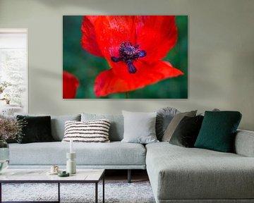 Rote Farbe der Liebe von Lili's Photography