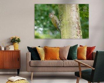 Grünspecht gegen einen Baumstamm von Marcel Klootwijk