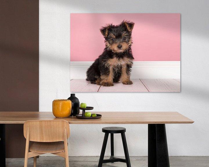 Beispiel: Yorkshire-Terrier-Welpe von Elles Rijsdijk