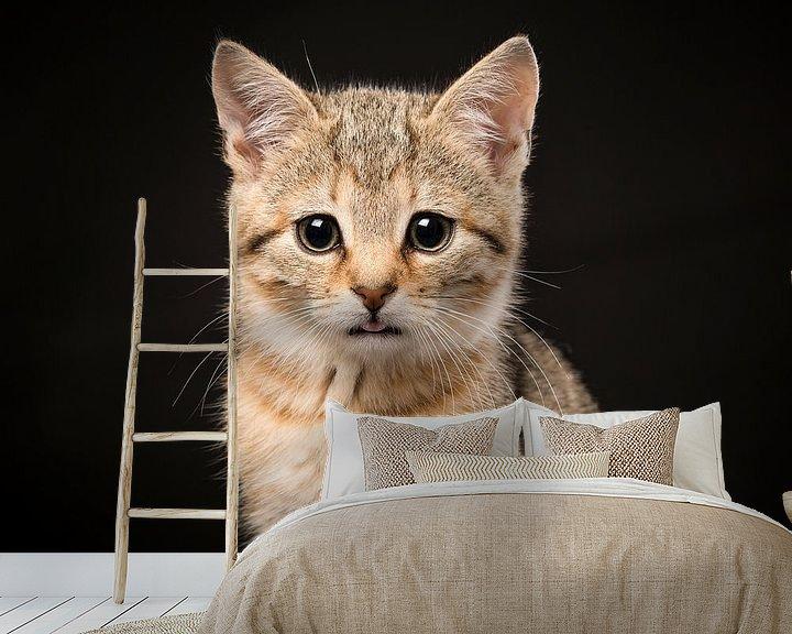 Beispiel fototapete: Zypriotisches Kätzchen von Elles Rijsdijk