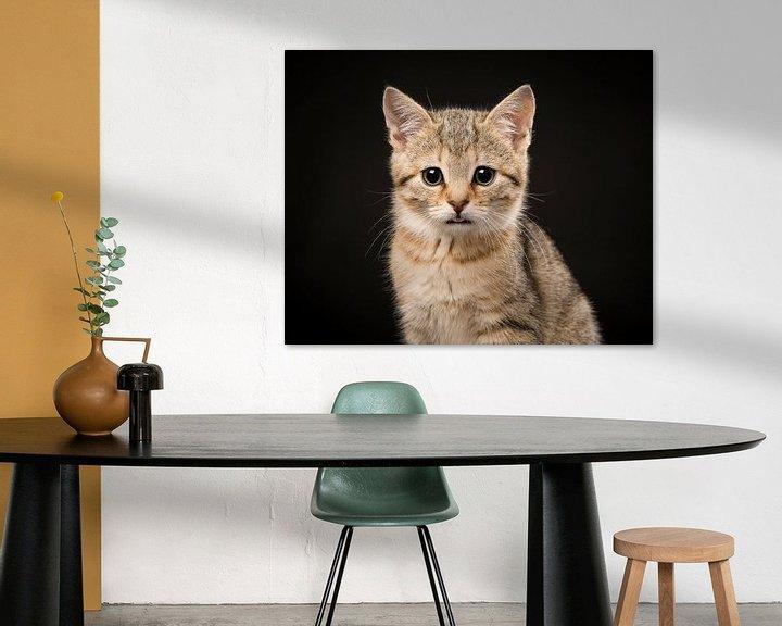 Beispiel: Zypriotisches Kätzchen von Elles Rijsdijk