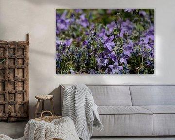 Paarse bloemen van Simen Crombez