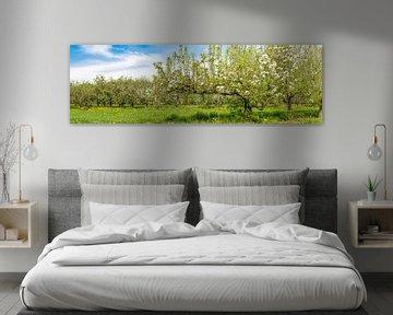 Lente in de boomgaard met oude appelbomen van Sjoerd van der Wal