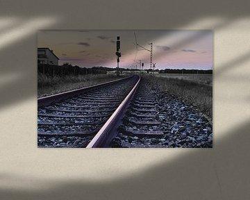 Black-Rail von Richard Schröder
