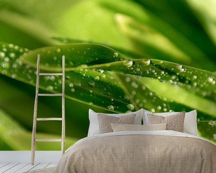 Sfeerimpressie behang: Dauwdruppels op het groen van Ina Muntinga
