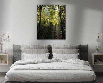 Zonnestralen in het bos van Markus Lange