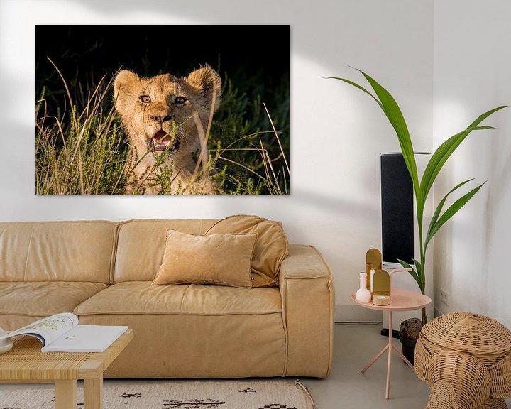 Beispiel: Löwenjunges im Gras Südafrika von John Stijnman