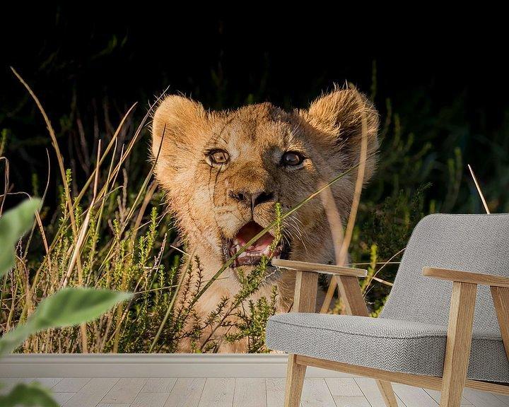 Beispiel fototapete: Löwenjunges im Gras Südafrika von John Stijnman