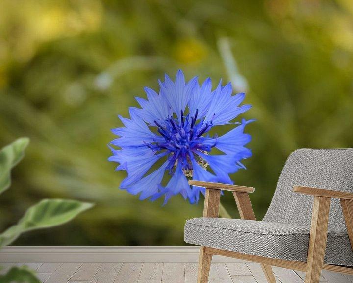 Beispiel fototapete: Blaue Blühte von Florian Kampes