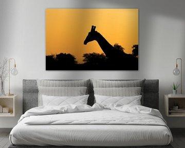Silhouet giraf Afrika landschap van John Stijnman