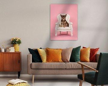 Luxus-Hund von Elles Rijsdijk