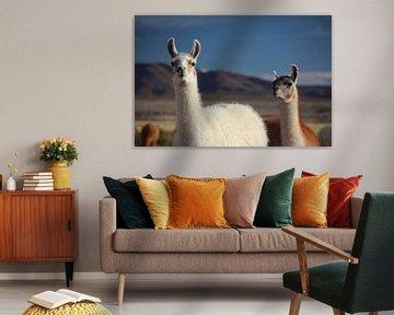 Lama's op de Altiplano in Bolivia tegen blauwe lucht van A. Hendriks