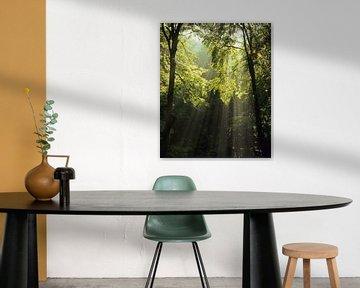 Rayons de soleil dans la forêt sur Markus Lange