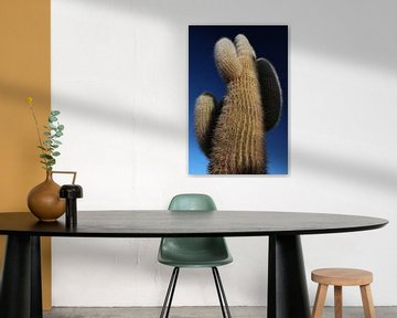 Eeuwenoude cactus, Bolivia, Salar de Uyuni, Isla Incahuasi van A. Hendriks
