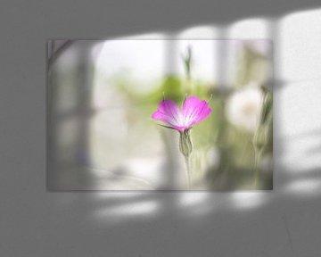 Wilde geranium van Linda Raaphorst