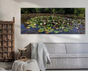 Waterlelies in vijver van DuFrank Images