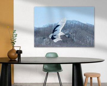 Vliegende chinese kraanvogel op Japan van Sven Scraeyen